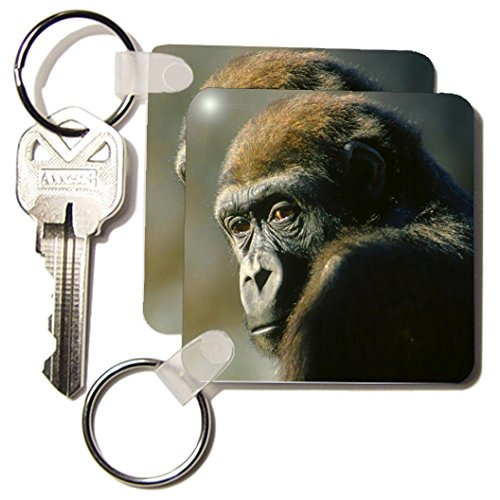 Gorilla Keychain - 3dRose Gorilla Portrait - Key Chains, 2.25 x 4.5 inches, set of 2 (kc_2546_1)