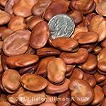 Fava Broad Windsor Heirloom Bean Seeds