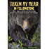 Taken by Bear in Yellowstone: A Century of Harrowing Encounters between Grizzlies and Humans
