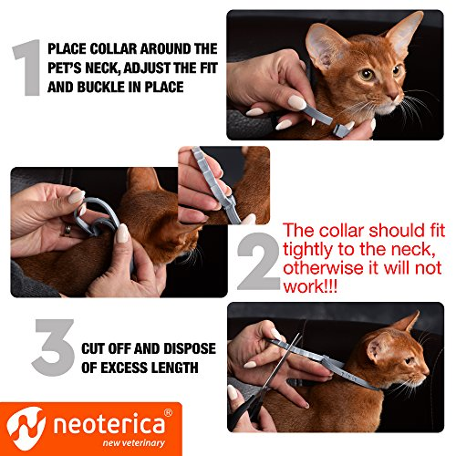 Rolf Club Collar for Cats - Flea Prevention for - Flea and for Safe Repellent Waterproof Tick