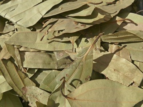BAY LEAVES Indian Cooking SPICES Tej Patta WHOLE - 250g