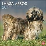 Lhasa Apsos 2011 Square 12X12 Wall Calendar