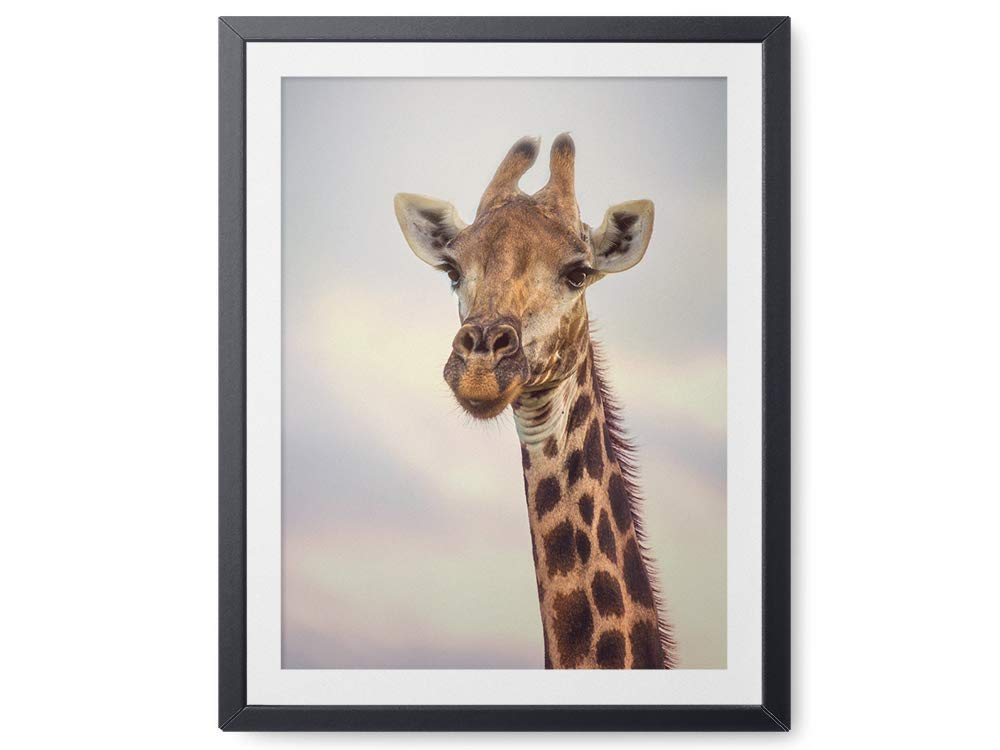 Giraffe Wildlife Photograph Animal Picture Home Decor Wall Nature Print Variety of Size Available