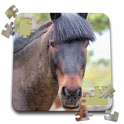 Danita Delimont - Horses - Horse, Madaket, Nantucket, Massachusetts, USA - 10x10 Inch Puzzle (pzl_279049_2) - Nantucket Bay