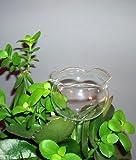 8x Boules d'arrosage boule d'arrosage Plante-Sitter Distributeur de l'eau