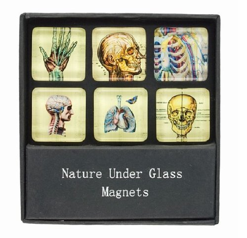 Glass Magnets with Skeleton and Anatomy Prints