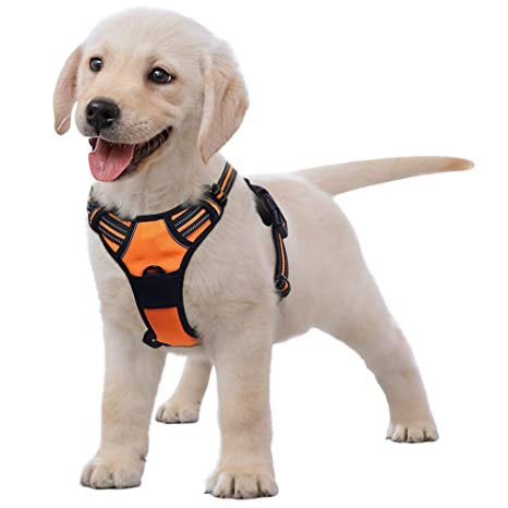 Amazon.com : Eagloo No Pull Dog Harness with Front Clip, Walking Pet