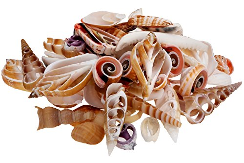 Cut Necklace Shell Necklaces - Cut Shell Pack - Sea Shells Mixed Beach Seashells - 300 Grams - Quality, Handpicked and Cleaned