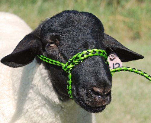 Weaver Leather Poly Rope Sheep Halter (Halter Rope Poly)