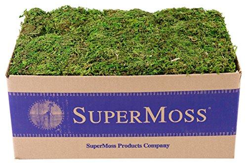 SuperMoss (23805) Mountain Moss Preserved, Fresh Green, 3lbs ()