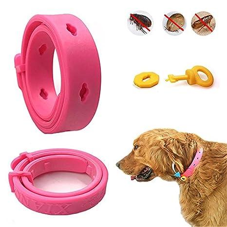 Collar de Perro - TianTa - Tick + Pulgas y repelentes de Insectos, Insecto Plagas Repelente collar Para Perros y Gatos, Protección de 80 días: Amazon.es: ...