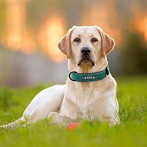 Didog-Collar-de-piel-suave-acolchada-personalizable-para-perro-chapa-de-nombre-anilla-en-D-collar-grabado-para-perro-tamanos-pequeno-mediano-y-grande