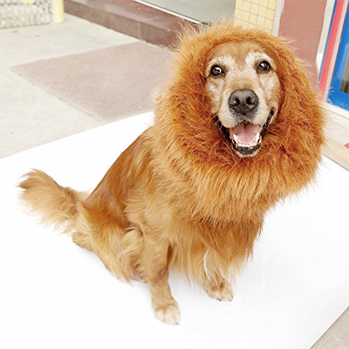 [Bassion Lion Mane Wig for Dog and Cat Lion Pet Halloween Costumes with Ears] (Dog Lion Costume Large)
