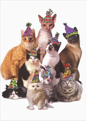 Amazon Cats In Party Hats