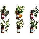 kit aromathérapie. Lot 6 huiles essentielles HEBBD