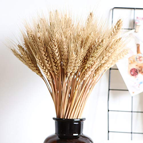 Wedding Decorations Dried Wheat Sheaves,100pcs Natural Wheat Bouquet Bunch Stalk Bundle,Bride and Groom Holding Flowers,DIY Home Kitchen Table Wedding Centerpieces (a)