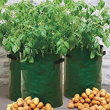 Generic.. otatoes su propia o bolsa de cultivo con maceta ...