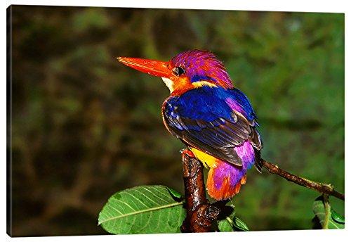 iCanvasART India. Three-Toed Kingfisher Canvas Print, 26'' x 1.5'' x 40''