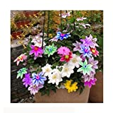 Bonsai Clematis Bulbs Wire Lotus Plant Seeds Multicolor Clematis Climbing plants Seeds 300 Particles