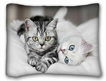 Amazon.com: ksexs Genérico personalizado (animales gatos ...