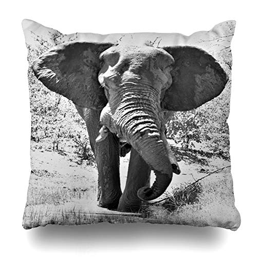 Ahawoso Throw Pillow Cover African Lone Elephant Bull Africa Out Big Black White Huge Large Design Trunk Home Decor Pillow Case Square Size 20x20 Inches Zippered Pillowcase ()