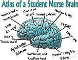 LA STICKERS Nursing Student Humor Brain - Sticker Graphic - Auto, Wall, Laptop, Cell, Truck Sticker for Windows, Cars, Trucks