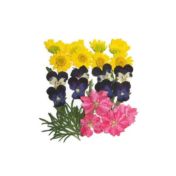 Silver J Pressed flower, mixed flowers 2 packs, Delphinium, Pansy, Chrysanthemum, Foliage