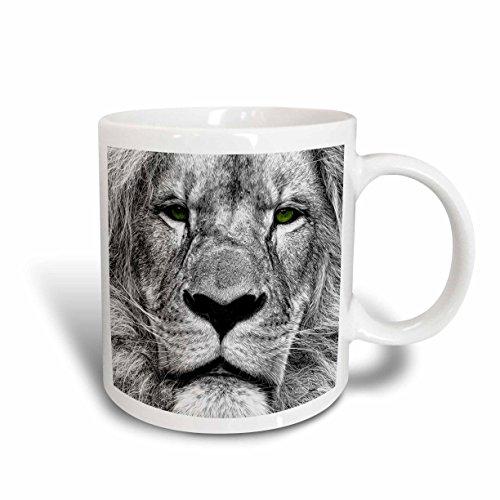 lion pics - 2