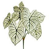 23'' Caladium Silk Plant -2 Tone Green (pack of 12)