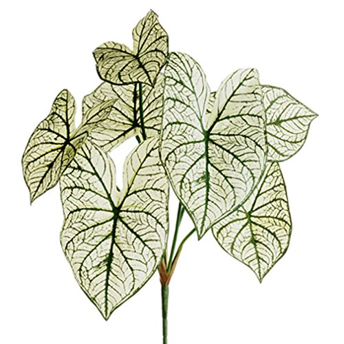 23'' Caladium Silk Plant -2 Tone Green (pack of 12) by SilksAreForever