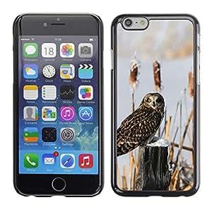// PHONE CASE GIFT // Duro Estuche protector PC Cáscara Plástico Carcasa Funda Hard Protective Case for iPhone 6 / Curioso búho de la nieve /