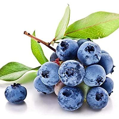Fercisi 50pcs/ Bag Blueberry Fruit Seeds Home Garden Potted Plants Fruits : Garden & Outdoor