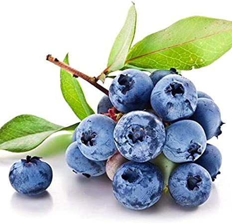 Free Venus 50 unids/bolsa Blueberry Fruit Seeds Home Garden Plantas en maceta Semillas