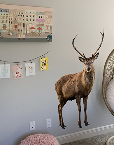 Stickerbrand Wildlife Nature Deer Wall Decal Sticker. Posing and Staring. Large Horn Buck with Antlers. 48in Tall X 27in Wide 6105m-48x27 ()
