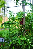 """Burpee Extra Large Heavy Gauge Green Tomato 3 Cages 