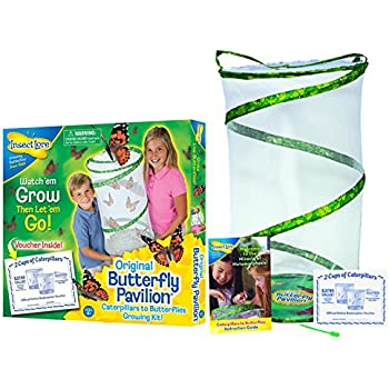 Insect Lore Butterfly Pavilion - Large Habitat Hatching Kit With Voucher For 10 Caterpillars