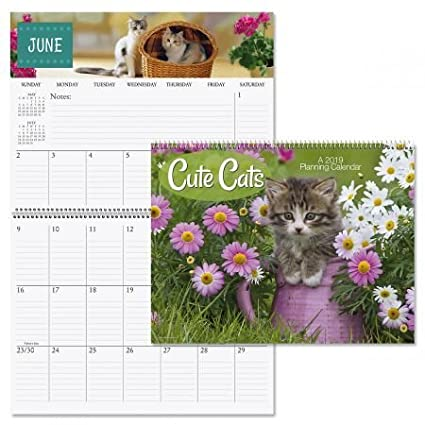 Amazon Com 2019 Changing Seasons Big Grid Planning Calendar 12