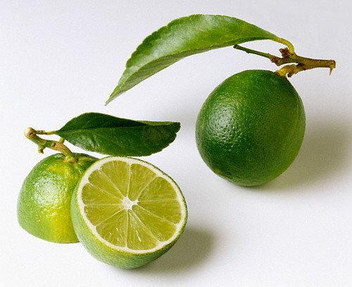 potted lime tree - 2