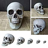 Takefuns Halloween Party Creepy Skull Decoration Various Sizes Realistic Looking Skeleton Skull Home Statue for Best Halloween Decoration Indoor Outdoor Decoration 15x15x22 cm