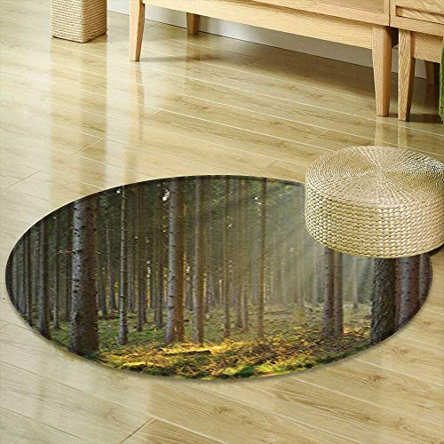 Round Area Rug Carpet Farm House Decor Collection Sunbeams Comes into Natural Misty Spruce Forest from The Right Top Picture Olive Green Tan Living Dinning Room and Bedroom Rugs R-35