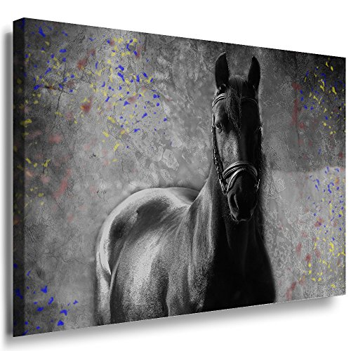 Julia Art Leinwandbilder Schwarzes Pferd Bild 1 Teilig 70 Mal 50