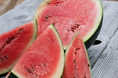 Sugar Baby Bush Watermelon 25+ Seeds-Rare