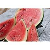 Sugar Baby Bush Watermelon 25+ Seeds-Rare