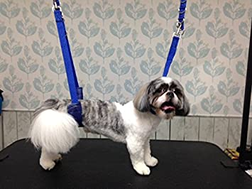 Dog Grooming noose/Straps/harness/restraint for small to large dogs