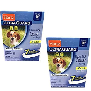 Hartz Flea Collar for Small Dogs Water Resistant 7 Months Protection Fits Necks Up to 20 Inches Pack of 2 64