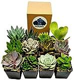 Fat Plants San Diego Succulent Plants (12)