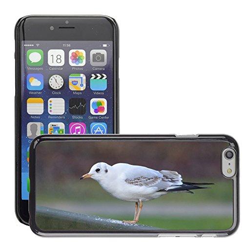 "Bild Hart Handy Schwarz Schutz Case Cover Schale Etui // M00133969 Seagull Vogel Natur // Apple iPhone 6 PLUS 5.5"""