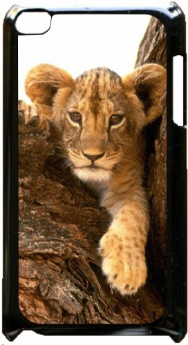 Cute Lion Cub in a Tree - Black plastic snap on case - for the Apple iPod iTouch 5th Generation. (Touch Lion Ipod King 5 Case)