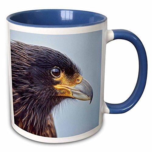 - 3dRose Danita Delimont - Birds - Striated Caracara bird, Falkland Islands - SA09 MZW0068 - Martin Zwick - 15oz Two-Tone Blue Mug (mug_141228_11)