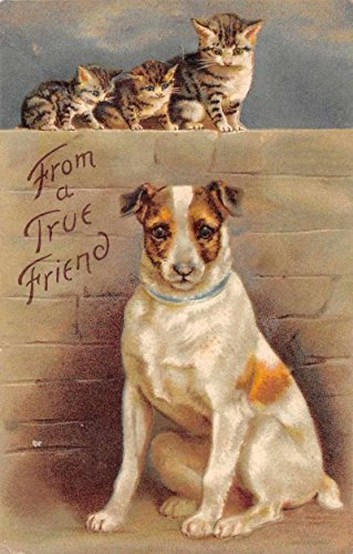 Terrier Antique (Dog and Cats Jack Russell Terrier Greetings Antique Postcard J73264)